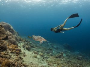 turttle diving yoga